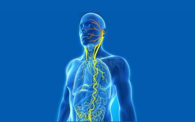 Het autonome zenuwstelsel: de missing link tussen weten en doen